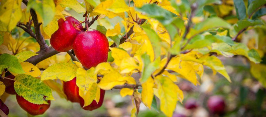 Grójeckie sady